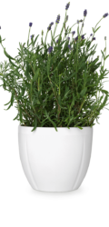 flower-pot-png-gc-flowerpot-oe16-cm-grand-cru-1200